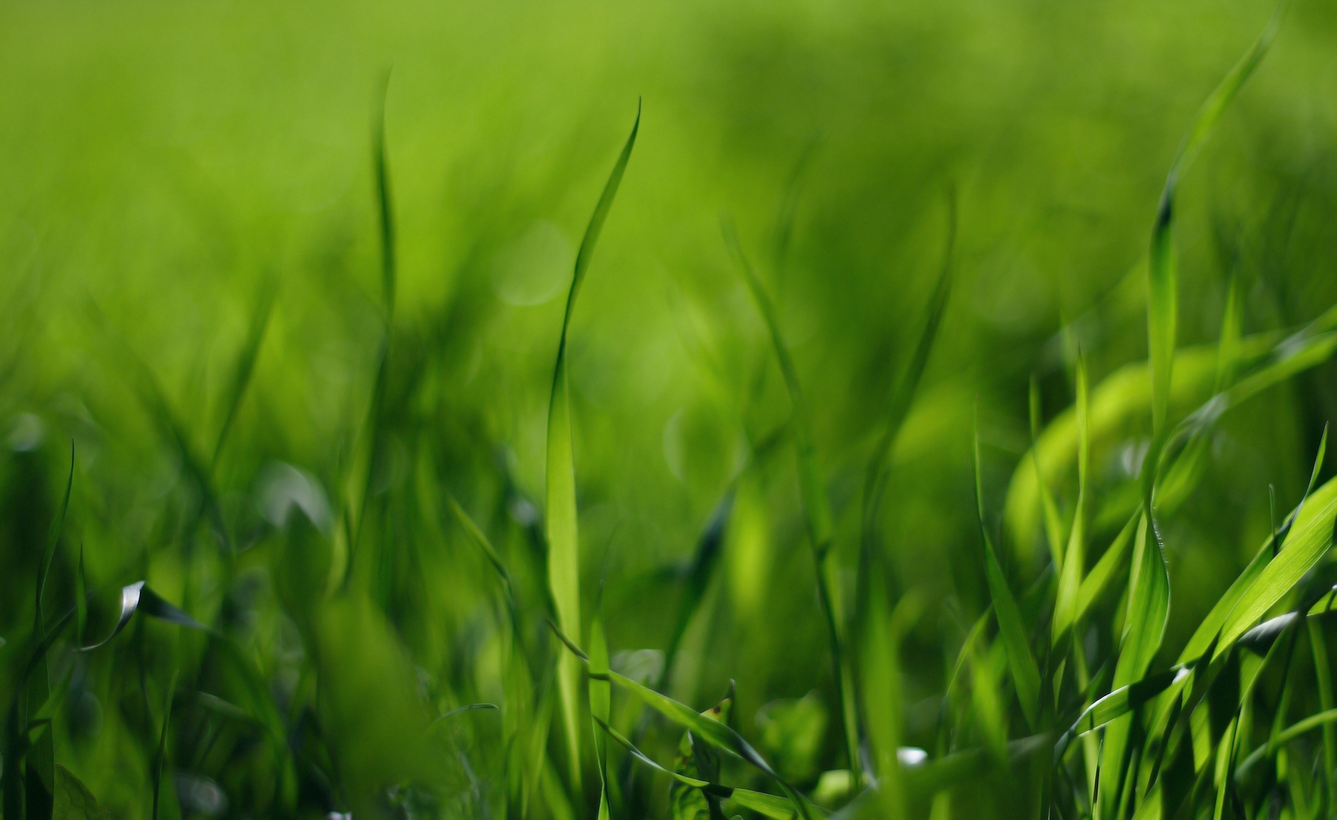 grass_shadows_blurred_hd-wallpaper-47487